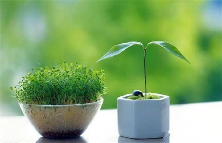 办公室绿色设计有哪些好方法?