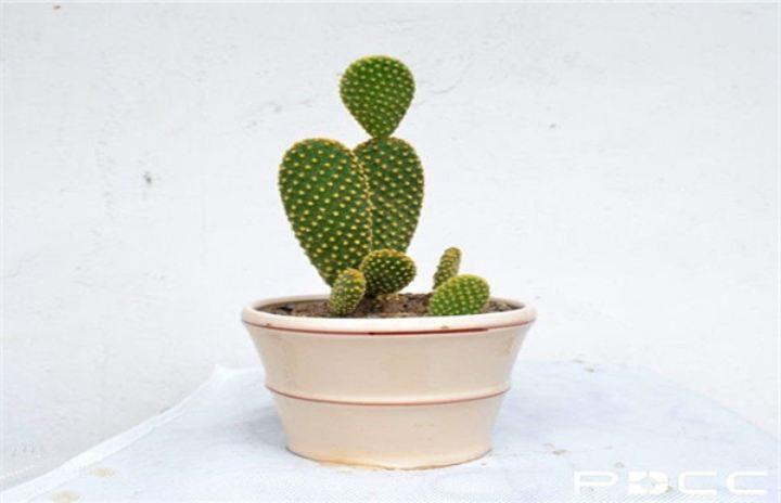 办公室维修保养中办公植物如何保养