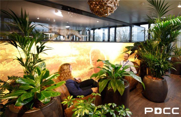 办公室装修风水之植物巧摆