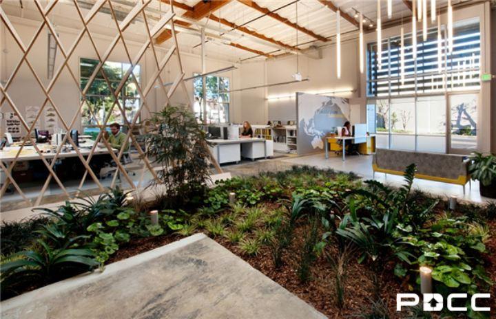 办公室风水植物摆放秘诀助你提升财运